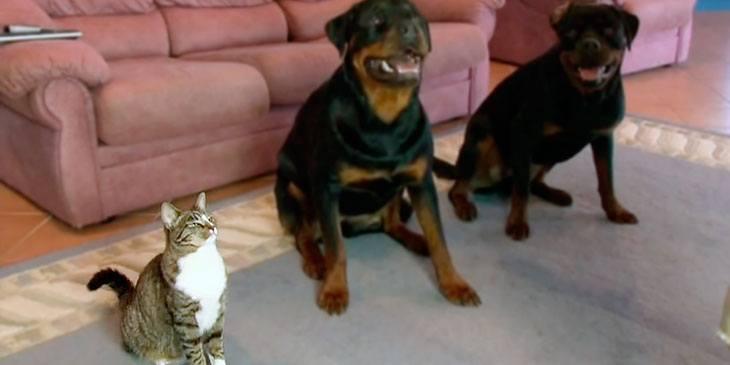 Hunder som ruller rundt er kanskje ikke så imponerende? Men … Følg med på katten!