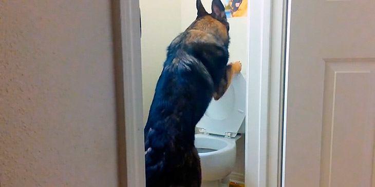 Denne hunden er en dyktigere toalettgjest enn mange menn jeg kjenner