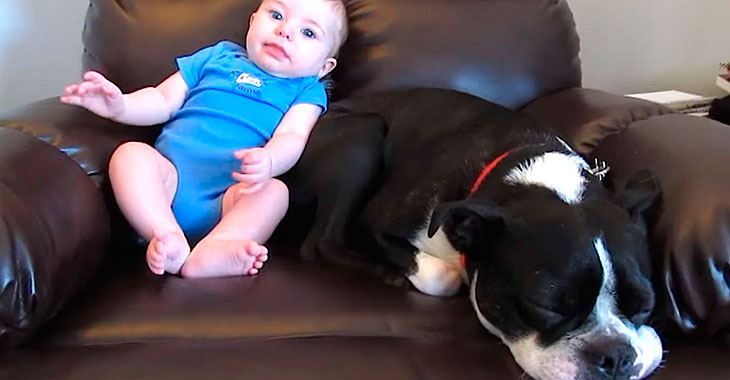 Babyen gjør det babyer ofte gjør i bleien… Men sjekk hvordan hunden til høyre reagerer!