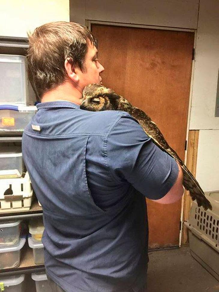 douglas-gigi-owl-rescue-02