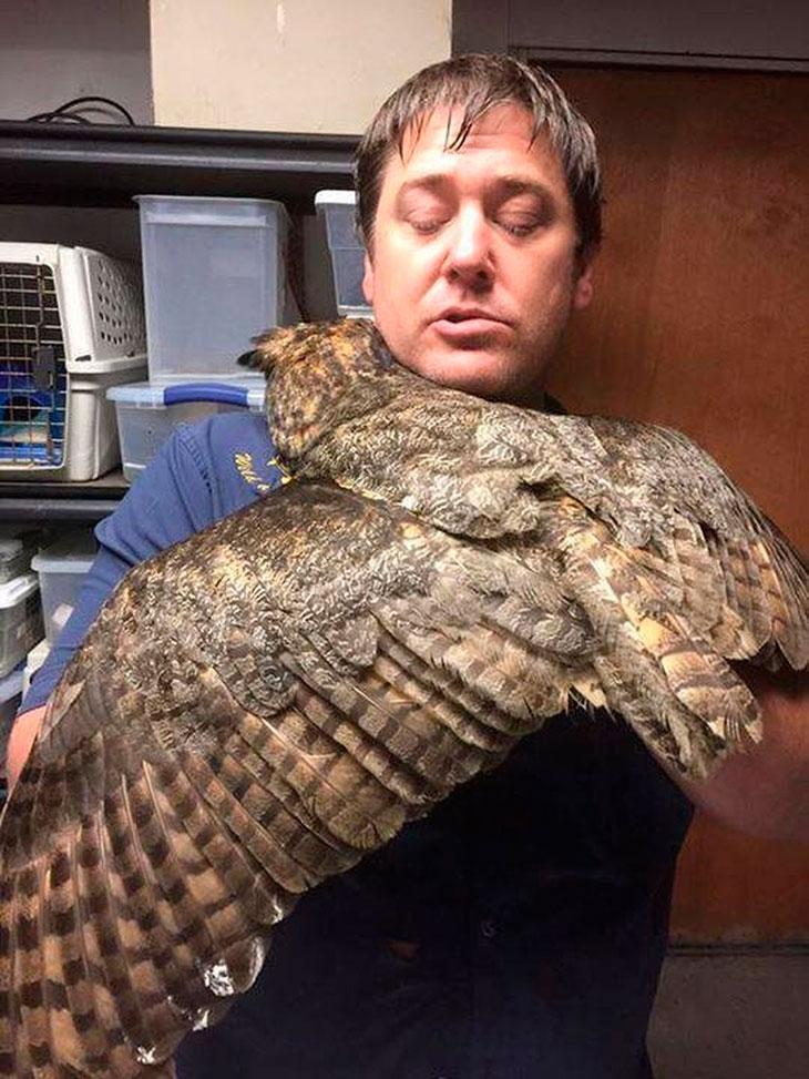 douglas-gigi-owl-rescue-03