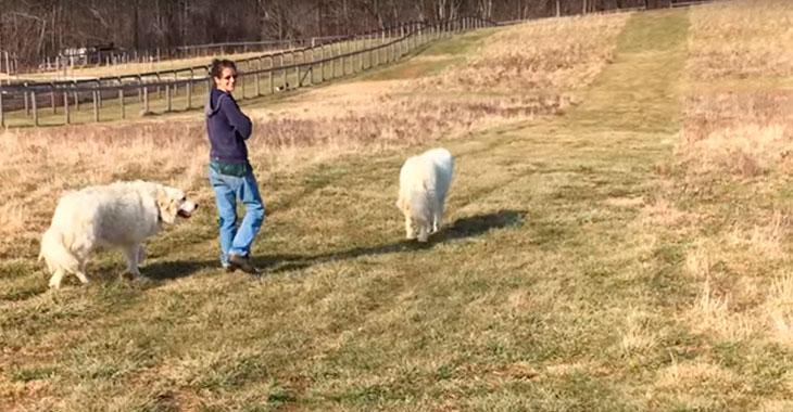 Hun lufter hundene sine. Men sjekk hvem som slår følge med dem! Så flott!