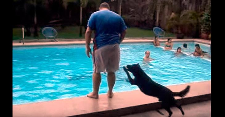Skøyerhunden «Toyo» elsker å dytte folk uti vannet