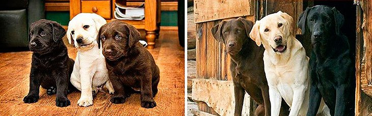 puppies-grow-too-fast-09