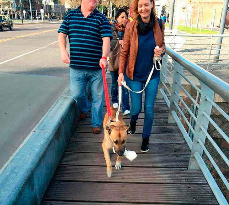 stray-dog-rubio-adopted-by-german-woman-olivia-07