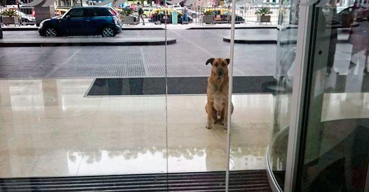 Løshunden Rubio venter på tyske Olivia
