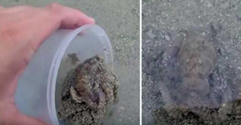 Mannen slapp en blekksprut tilbake i havet – Blekkspruten viste en takknemlighet han alltid vil huske