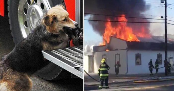 Brannmennene var i full sving med å slukke den overtente boligen – Da får de øye på hunden som løper inn i flammene