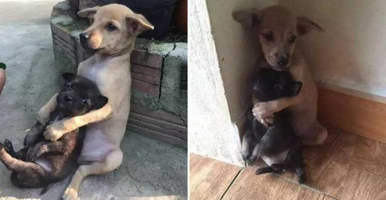 De reddet to hjemløse valper fra gaten – Reaksjonen til dyrene kan smelte en hver!