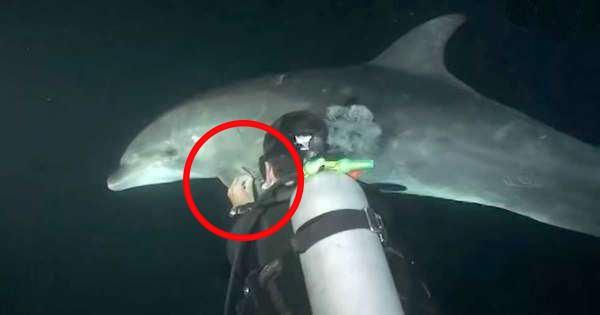 Da en delfin oppsøkte denne dykkeren, forsto han at noe var galt. Nå sprer den rørende scenen seg verden rundt!