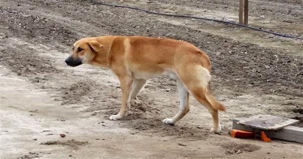 Forlatt hund ventet i dagevis på eieren sin. Han dukket aldri opp…