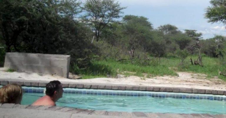 Familien slapper av i bassenget da en uventet gjest dukker opp for å besøke dem