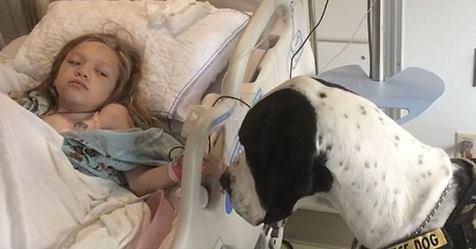 Betydningen en hund kan ha for et menneskes liv stopper aldri å sjokkere!