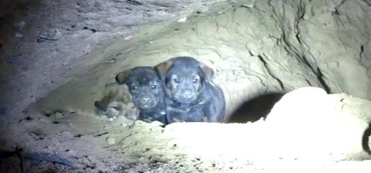 Valpene ble funnet i en hule – Redningsaksjon settes i gang, og den byr på en overraskelse!
