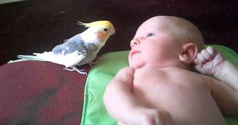 Fuglen går bort til den nyfødte babyen – det han gjør videre er bare helt herlig!