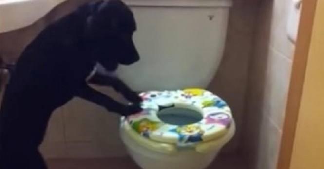 Hundeeier setter opp skjult kamera på toalettet – nå spres videoen som ild i tørt gress!