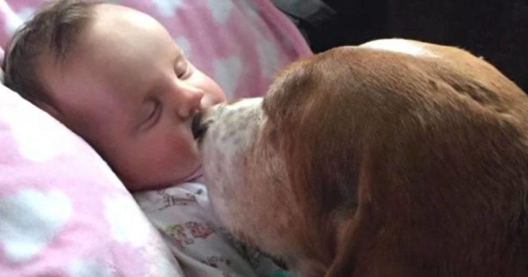 5 måneder gamle Nora hadde ikke lenge igjen å leve – Familiens hunder nektet å forlate sengen hennes