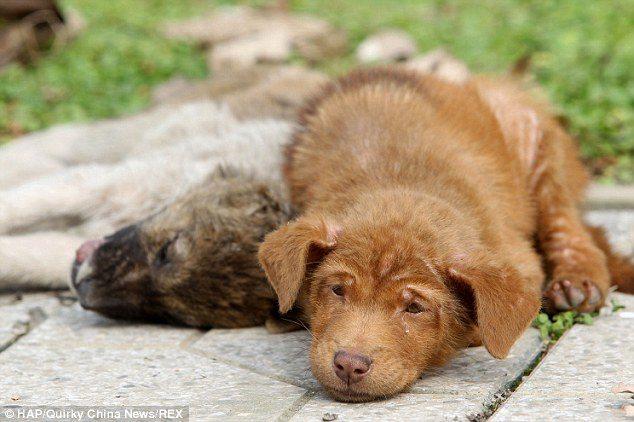 Hunden nekter å forlate sin døde venn